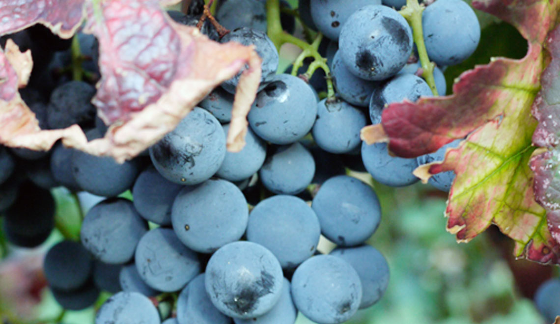 Pane_Vino_e_Web_nasce_il_blog_dedicato_al_digital_media_darketing_del_food_e_vino
